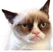 Face of a cat named Tarder Sauce known as GRUMPY CAT