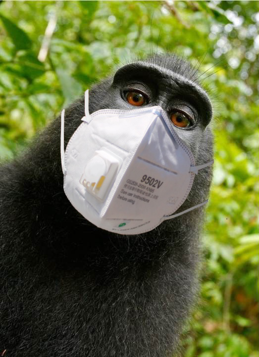 Monkey self-portrait with face mask added